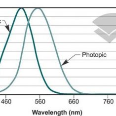photopic and scotopic responses